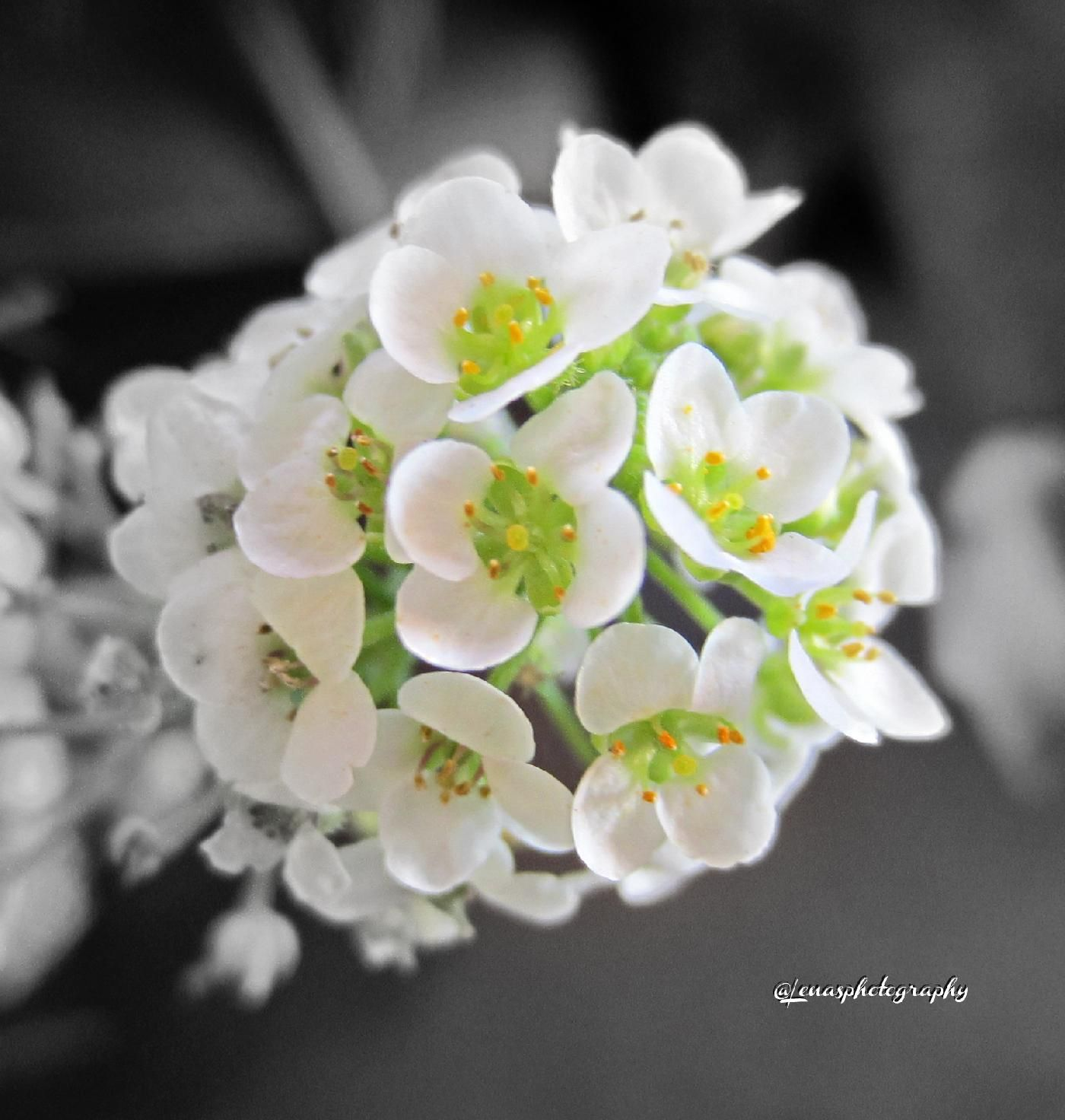 The Beauty Of Tiny White Flowers Always Gets My Attention White