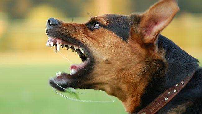 Entrenamiento al perro agresivo