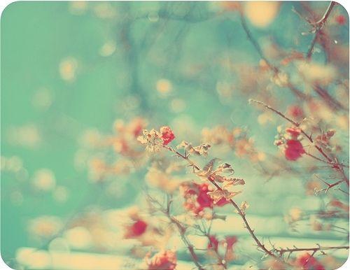 so lovely