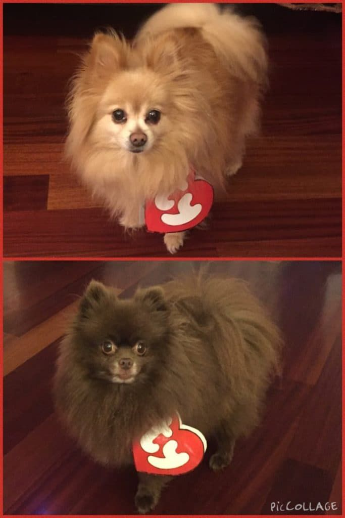 Beanie Baby Dog Costume and other DIY Halloween Costumes!  dogcostumes   halloweencostumesfordogs  diyhalloween  halloweencostumes   easyhalloweencostumes 471065ca22d8