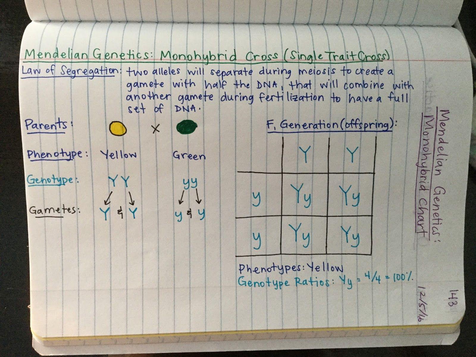 Advanced 2016-2017 Biology Notes | Biology notes, Biology ...