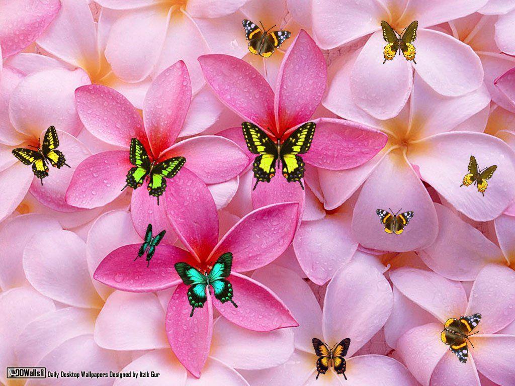Fondos De Pantalla De Flores Hermosas: Fondo De Pantalla Con Flores Para Bajar Al Celular 10 HD