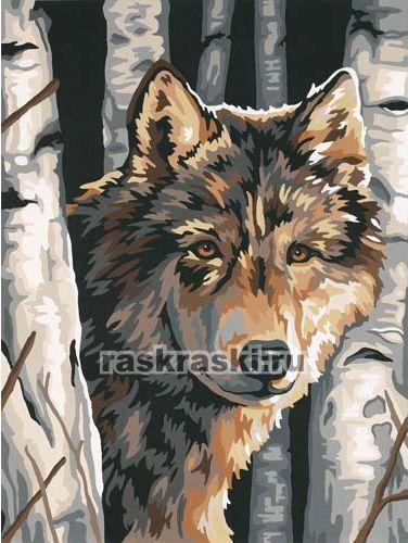 91325 Dimensions - Волк среди берез - Раскраски по номерам ...