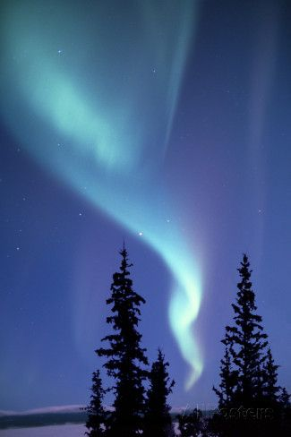 The Aurora Borealis, or Northern Lights, over Silhouetted ...