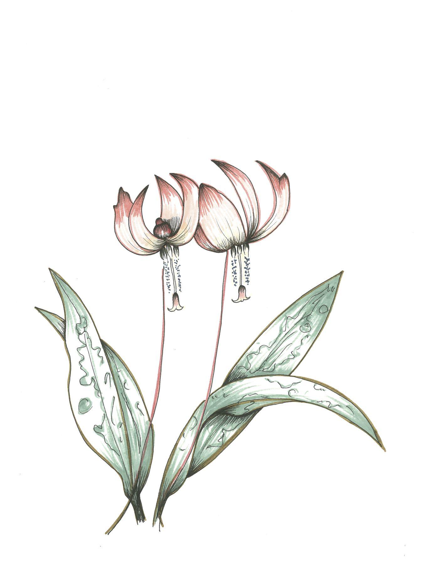 """LITTLE DANCER"" original 9x12 pen and ink illustration by Ming Schipper.  #ElementEdenArtSearch"