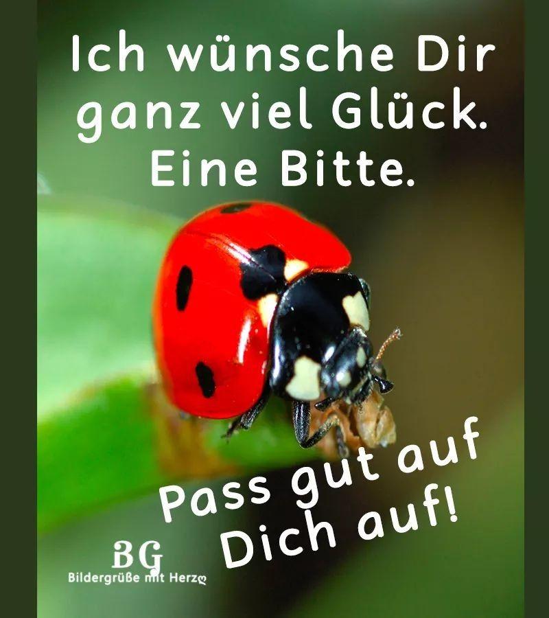 Pin Von Mein Handy Auf Wintermäntel Pinterest Glück Sprüche Und