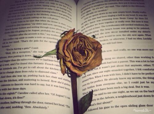 Image result for rose inside book pinterest