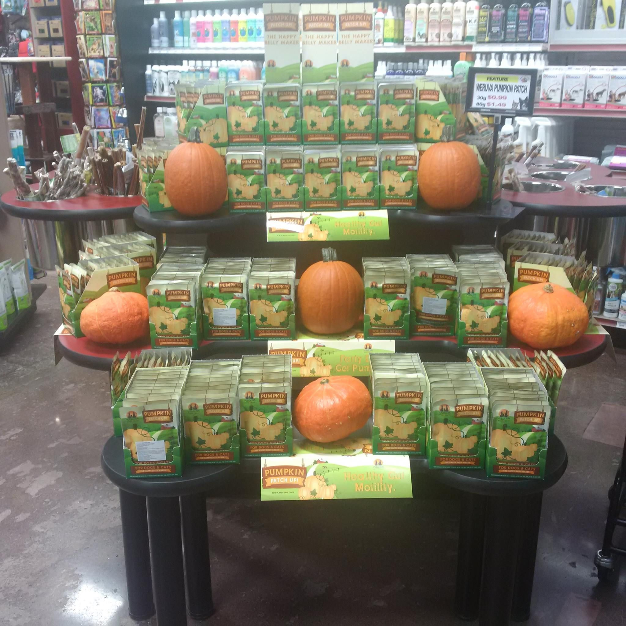 It S Pumpkin Time Weruva Pumpkin Patch Up Is A Pumpkin