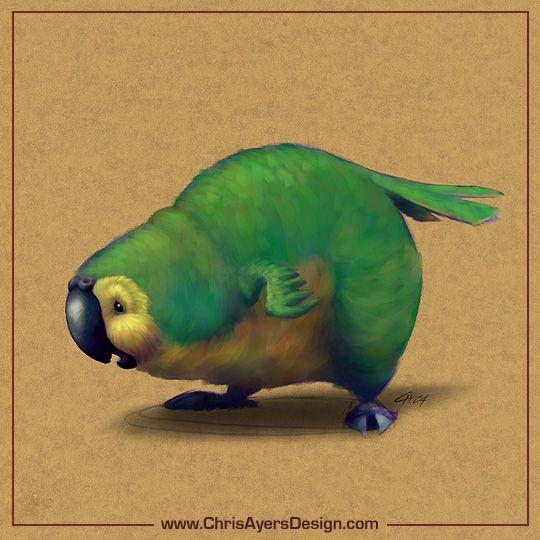 Kakapo by Chris Ayers