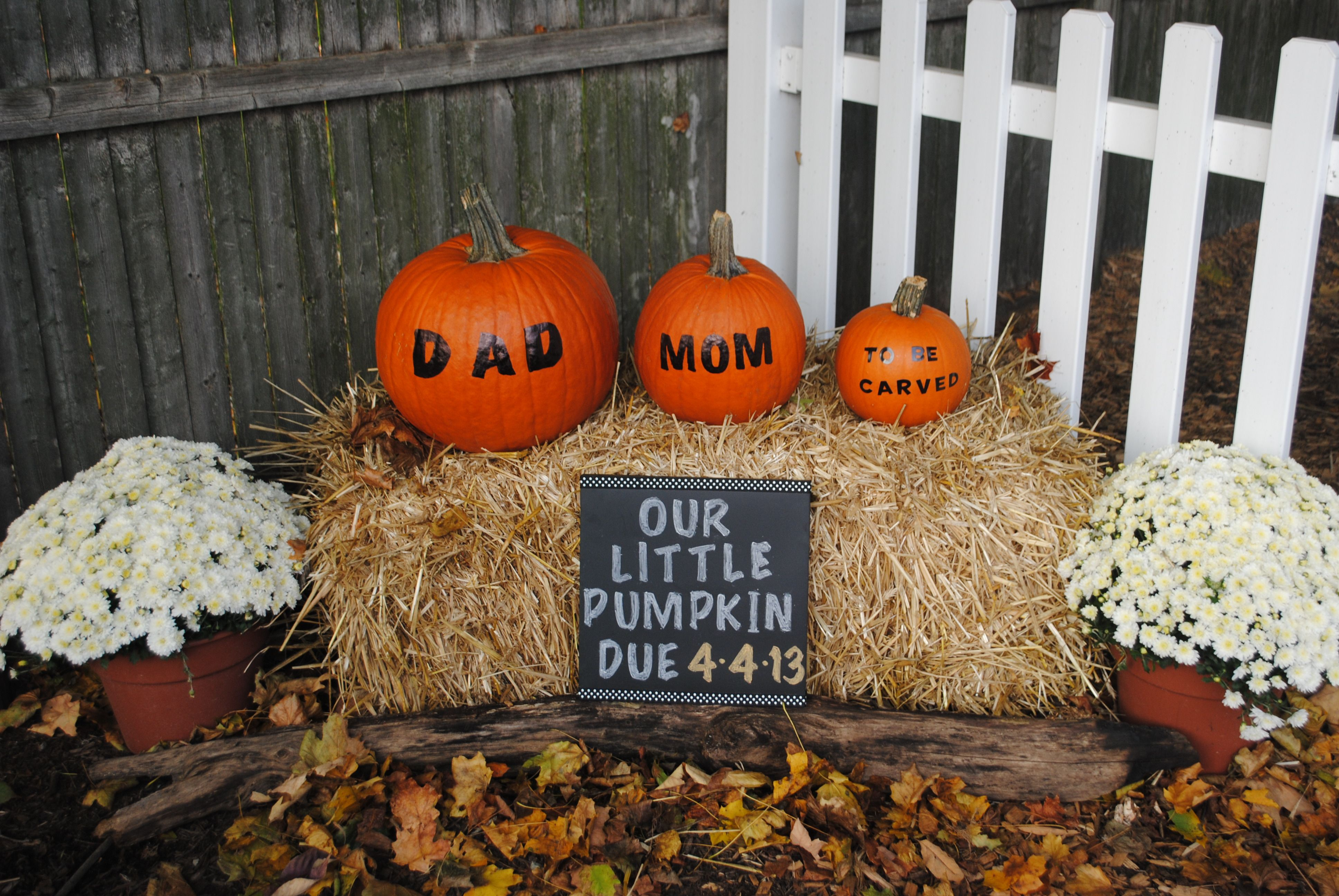 cool halloween pregnancy announcement idea check out stork 4d imaging studio to come in - Growing Halloween Pumpkins