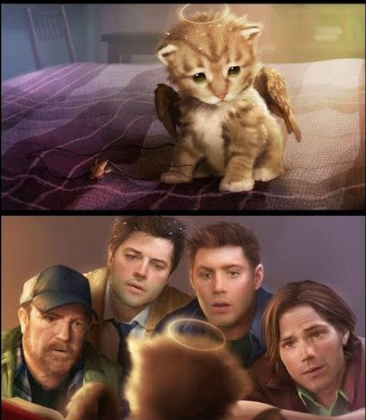 Aawwwww Supernatural Fans Supernatural Imagines Supernatural Dean
