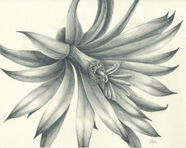30 wonderful and amazing pencil drawings takedesigns