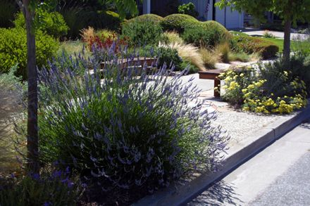 Delicieux Sustainable, Low Water Garden Design In San Jose, California | Taproot  Garden Design U0026 Fine Gardening
