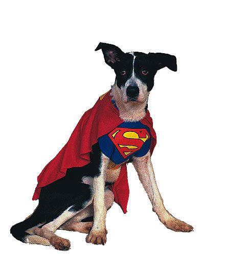 Antimatterstore.com - positronic pet products