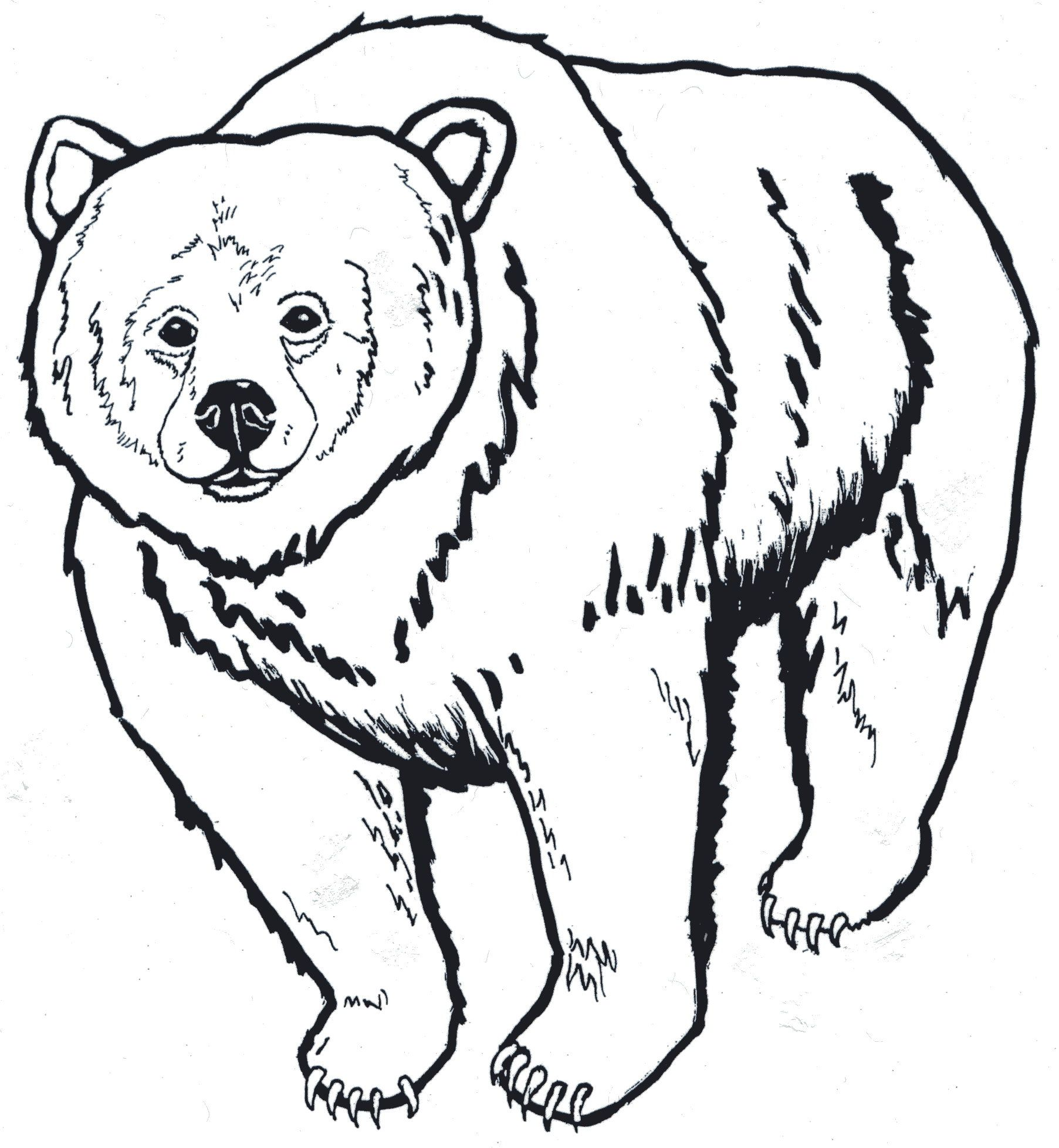 Brown Bear Head Clipart Black And White 12 With Images Bear