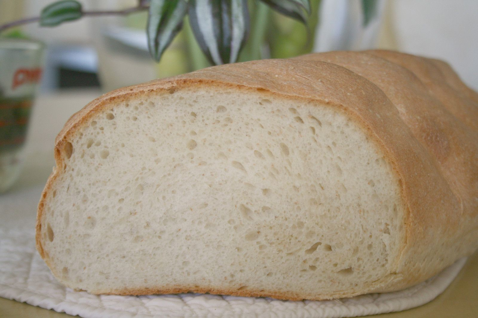 картинки жидкий хлеб существа