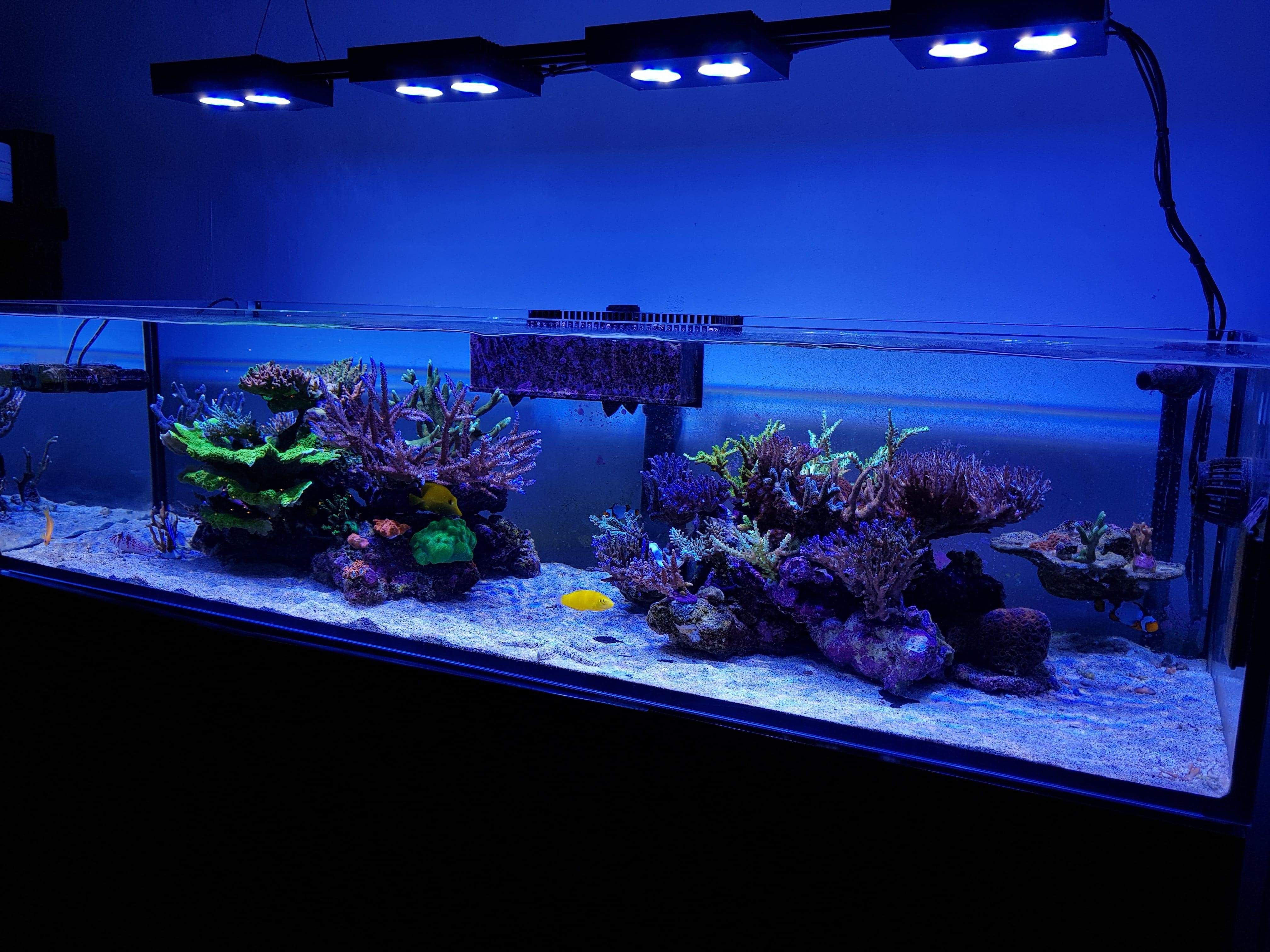 Red Sea reefer 450 with shallow tank sps reef hydra 26hd vertex