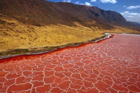 Lake Natron is a salt lake that is located in northern Tanzania near the Kenyan border. The lake gets its red colour from the microorganisms that thrive due to the fast evaporation rate of the lake, leaving deposits of salt and other minerals.