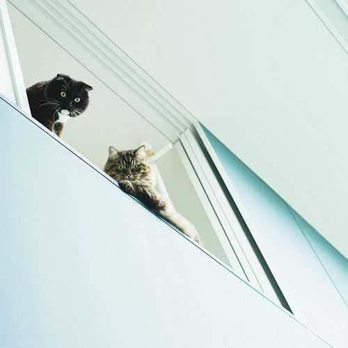cats up high
