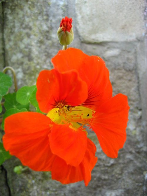 Nasturtiums are drought-tolerant, will grow in poor soil AND you can eat the flower. Try them in your salads