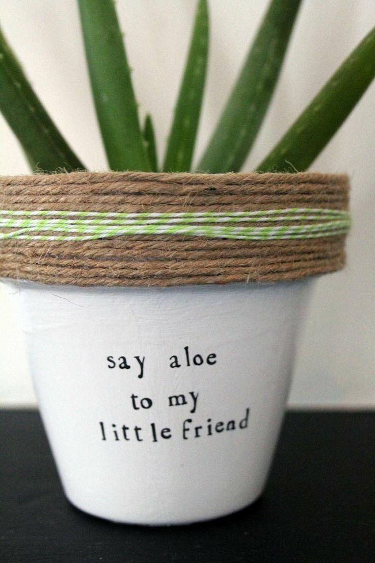 Pin By Asenath Creason On Plants Plants House Plants Indoor Plants