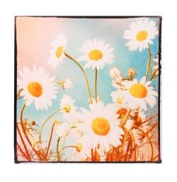 Charming picture of daisies. Will brighten up any room. Get it from pinkyred.co.uk