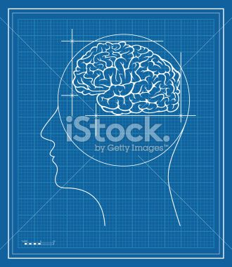Blueprint of a human brain human brain blueprint royalty free stock vector art illustration malvernweather Image collections