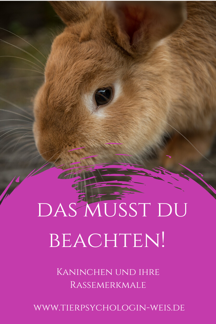Kaninchen Und Ihre Rassemerkmale In 2020 Kaninchenrassen Kaninchen Ernahrung Kaninchen