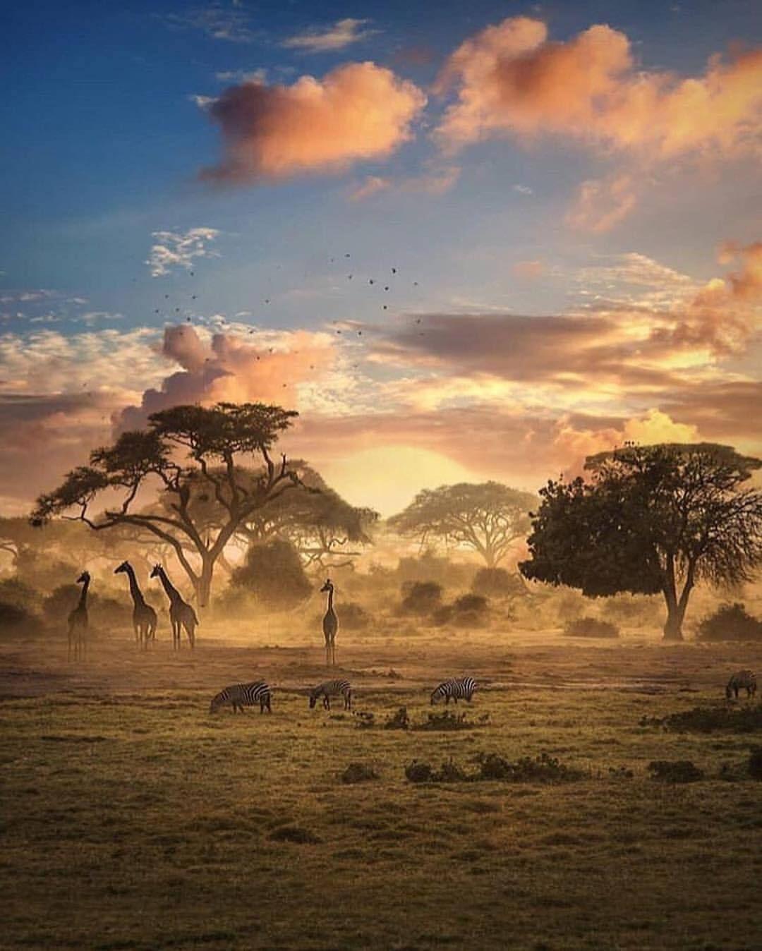 Enau So Stellt Man Sich Afrika Vor Elefanten Zebras Giraffen