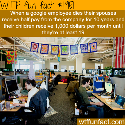 Best companies to work for - WTF fun facts GOOGLE!!!!!!!! Super happy working employee environment