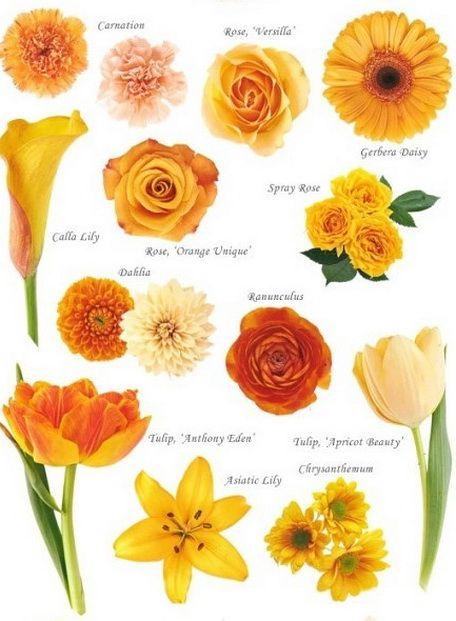 Peach Flowers Flower