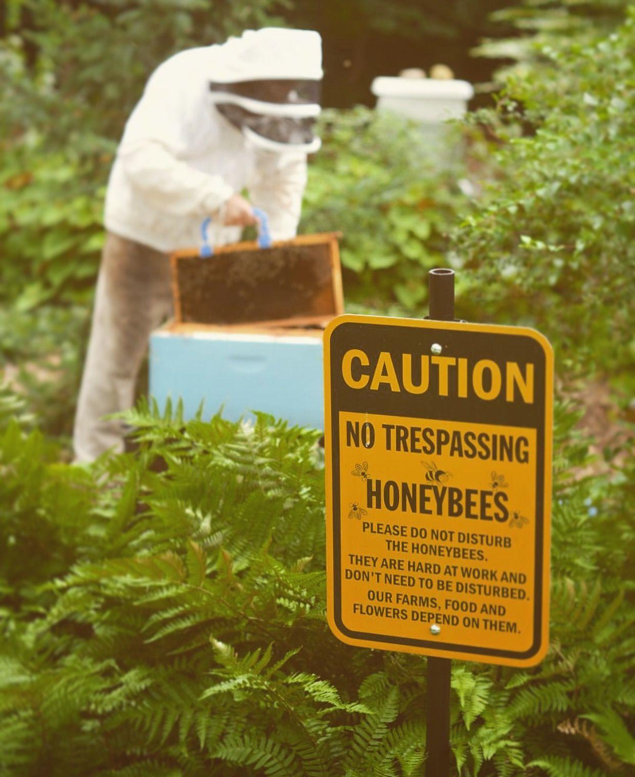 Beekeeper & honeybees hard at work! Do not disturb