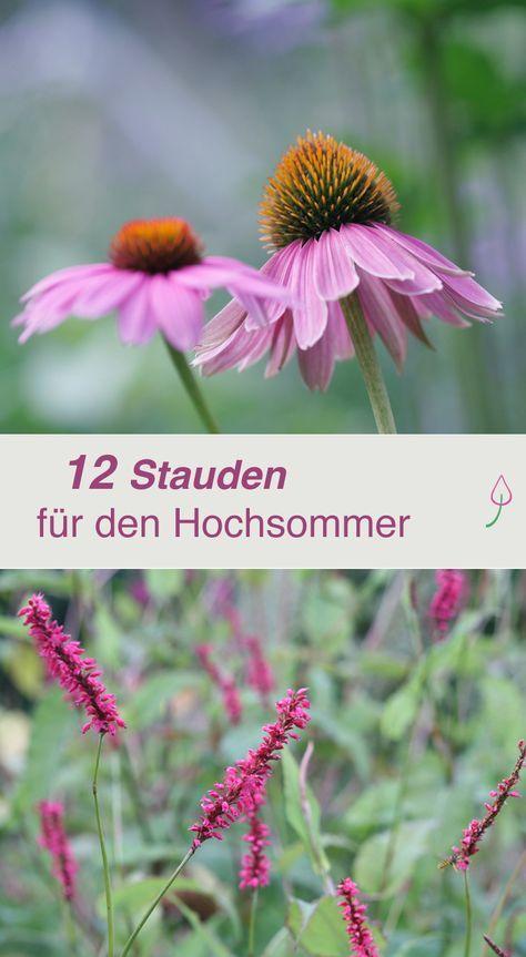 die 12 sch nsten sommerblumen da hgartenbepflanzung garten garten ideen und garten pflanzen. Black Bedroom Furniture Sets. Home Design Ideas
