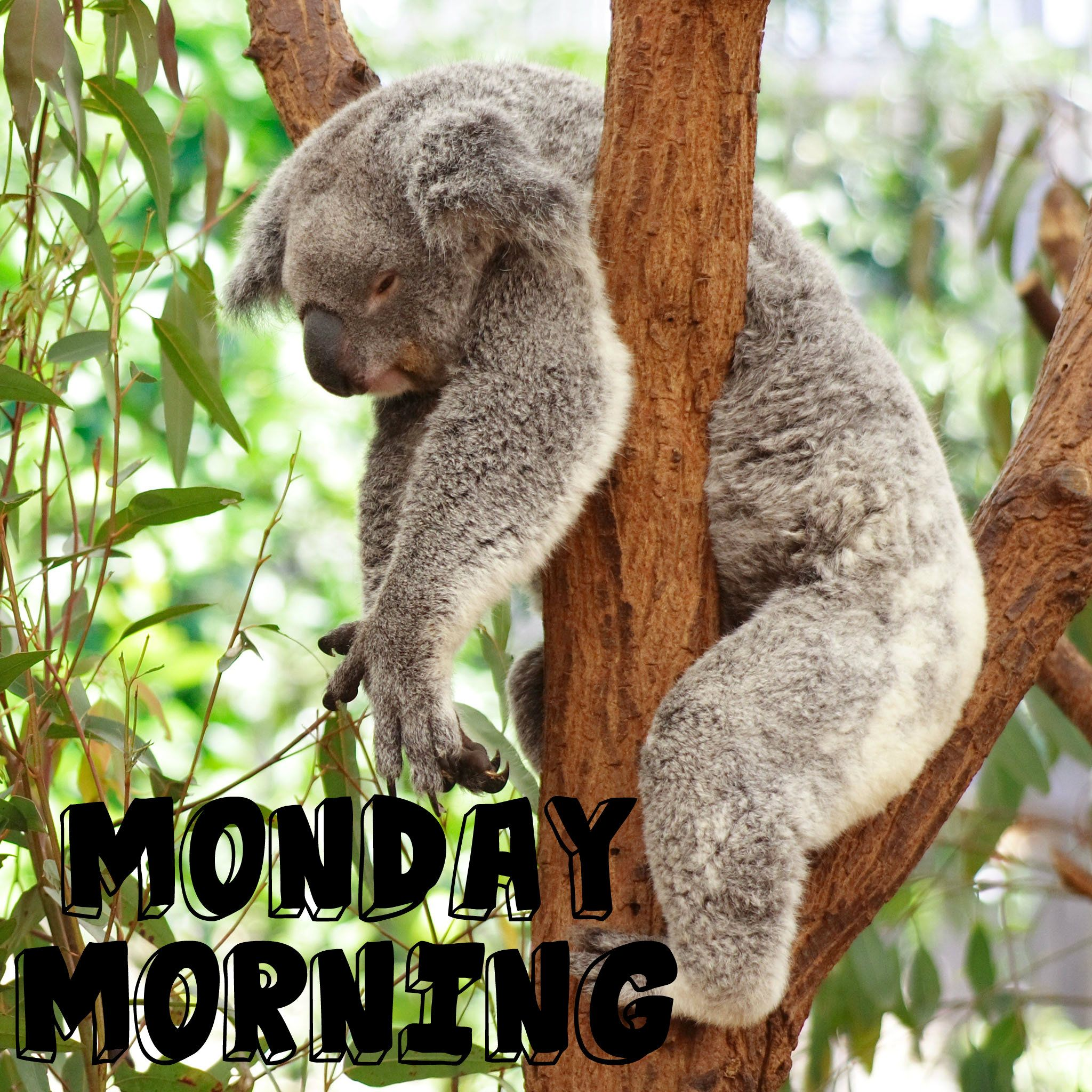 9 Clever Ways to Beat the Monday Blues Funny koala