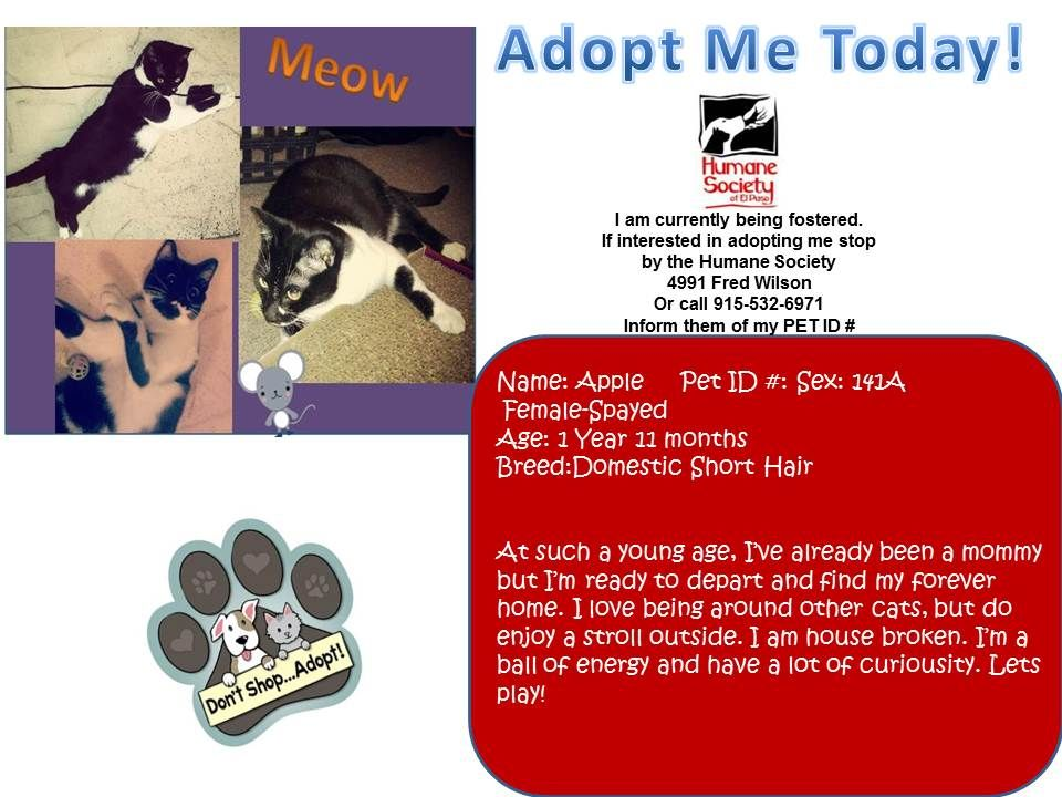 Apple is currently being fostered but ready for adoption