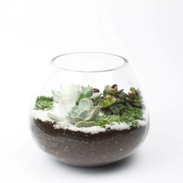 sukkulenten im glas im blickfang kreative deko ideen mit pflanzen wohnen pflanzen glas. Black Bedroom Furniture Sets. Home Design Ideas