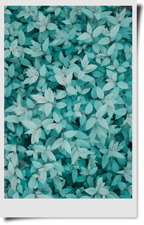 ❋花(Flower)❋ ❋花(Flower)❋ Pinterest Minimalism