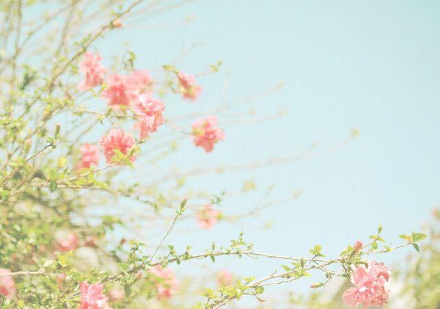 photo credit: #florabella by Shana Rae #pastel #vintage #flowers #shabbychic