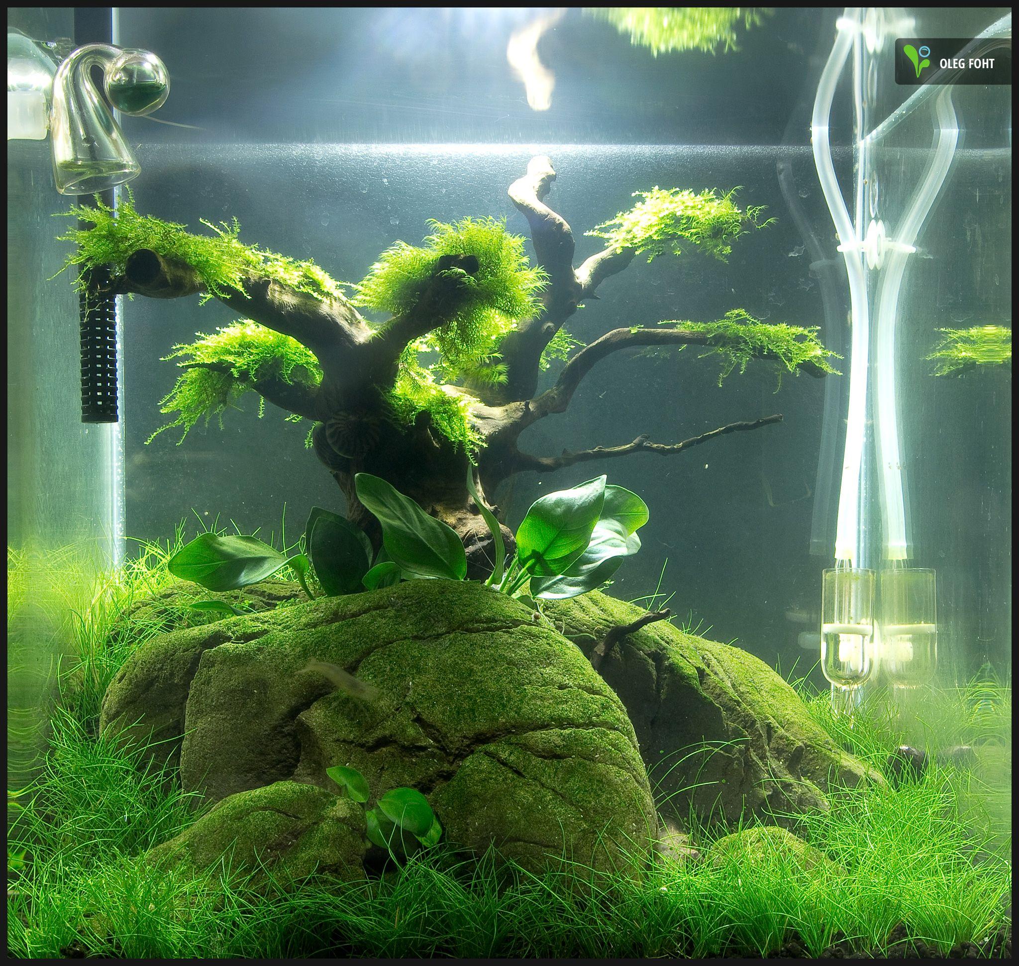 30 liter nano cube nach 8 wochen aquascaping for Aquarium 30 litres