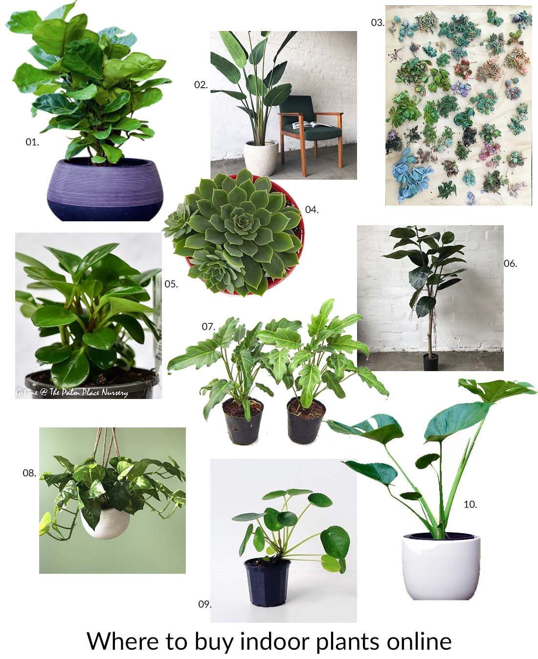 Grünpflanzen Green Plants Zimmerpflanzen: Where To Buy Indoor Plants Online
