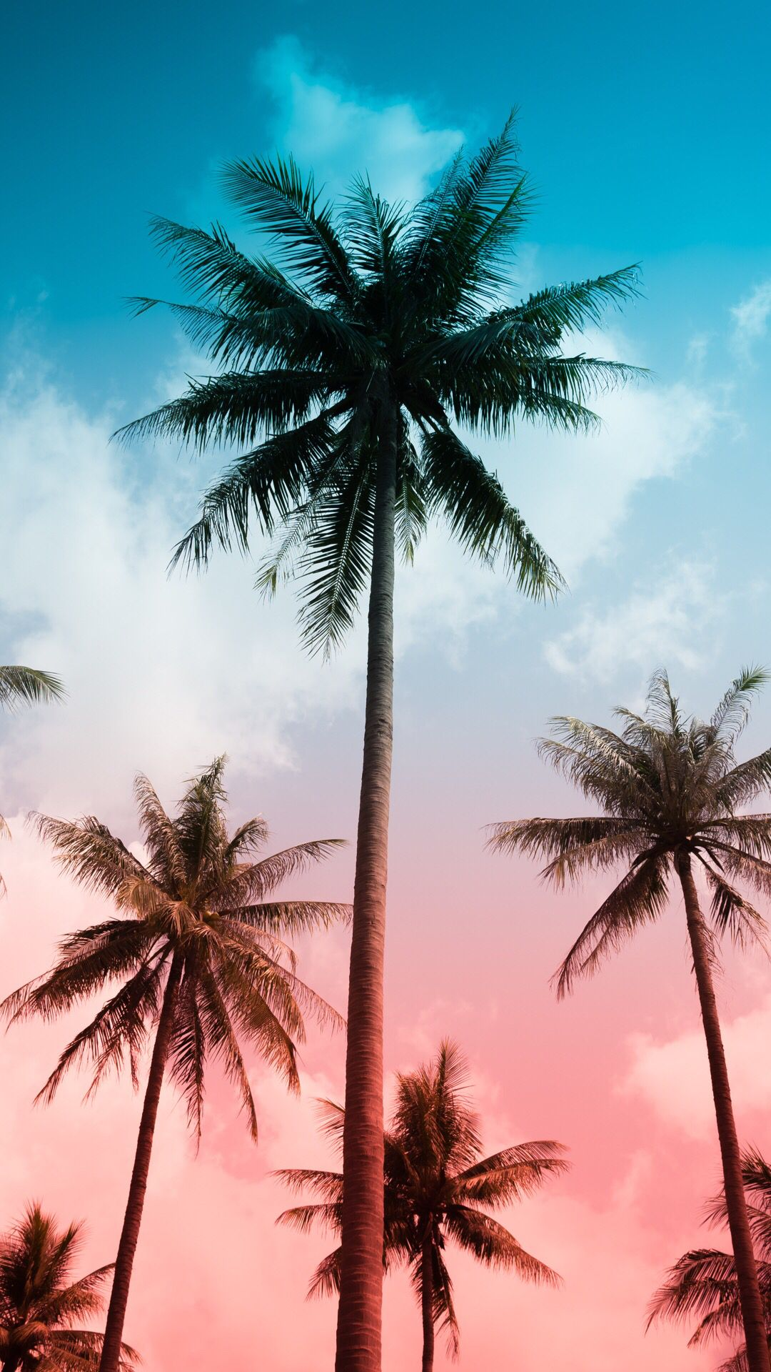 Palm Wallpaper For Your Iphone Xs From Vibe App Wallpaper
