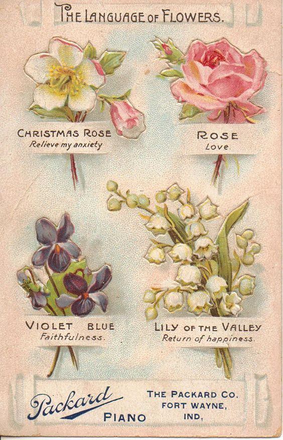 Raindrops And Roses Language Of Flowers Flower Meanings Victorian Flowers