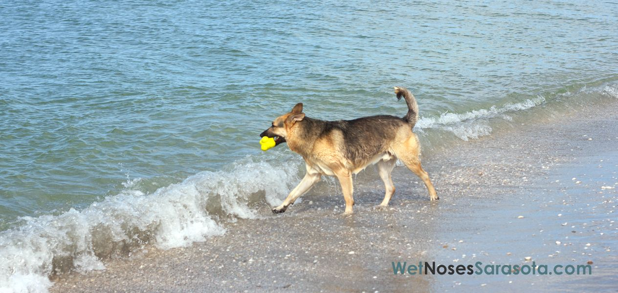 Sarasota Dog Parks & Dog Beaches Wetnoses of Sarasota