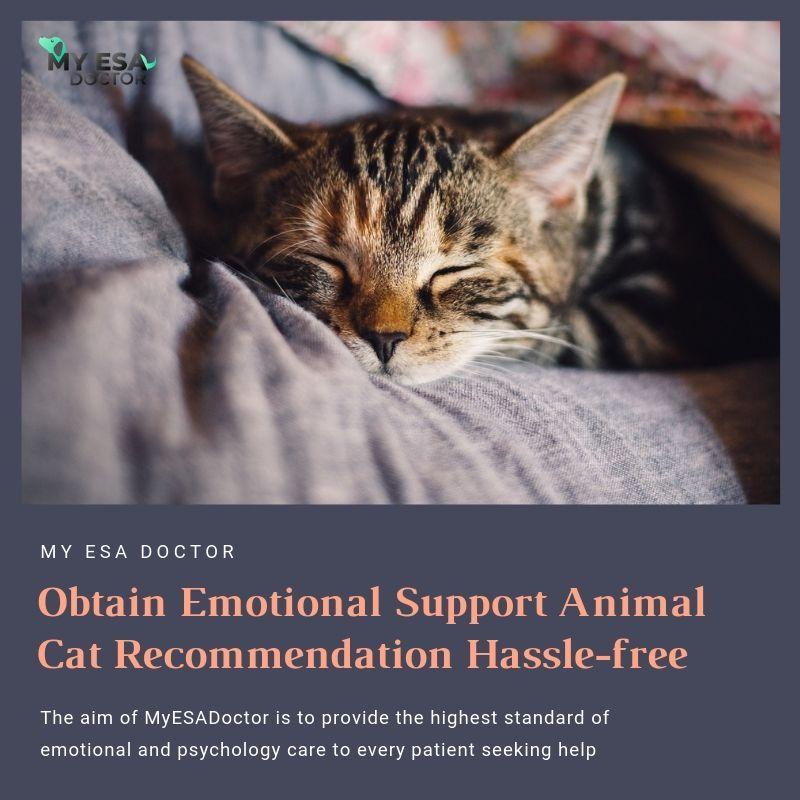 Get Emotional Support Cat Registration and Benefits