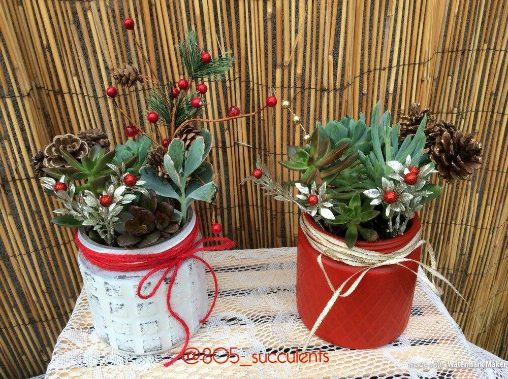 Christmas Succulent Gift Ideas.Holiday Succulent Arrangements Succulents Orchid