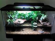 Fire Belly Toad Tank Setup Pets Aquatic Pets Frog Tank Frog