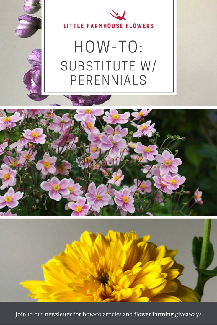 Perennial Substitutes How To Flower Farming Pinterest Perennials