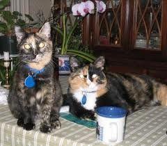 two cute tortie girls!