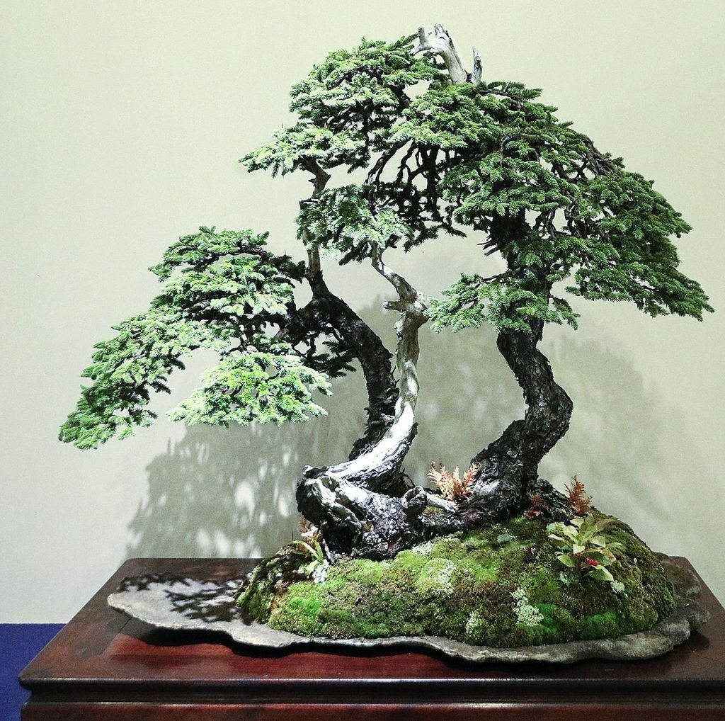 Achat Arbre D'intérieur 20 Cute Bonsai Trees Gardening Ideas For Your Backyard Hmdcr