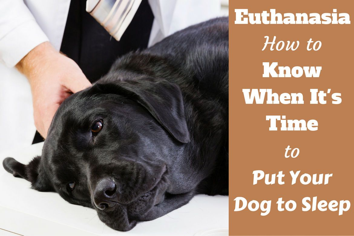 Euthanasia How to Know When It's Time to Put Your Dog